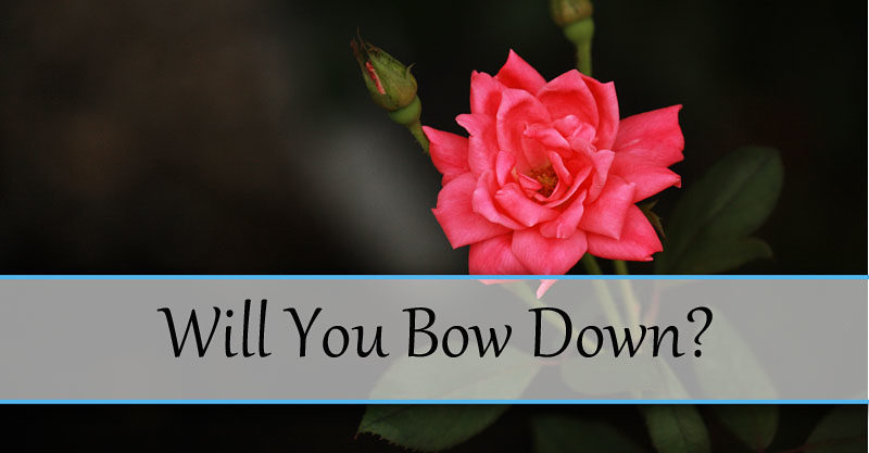 Will You Bow Down?